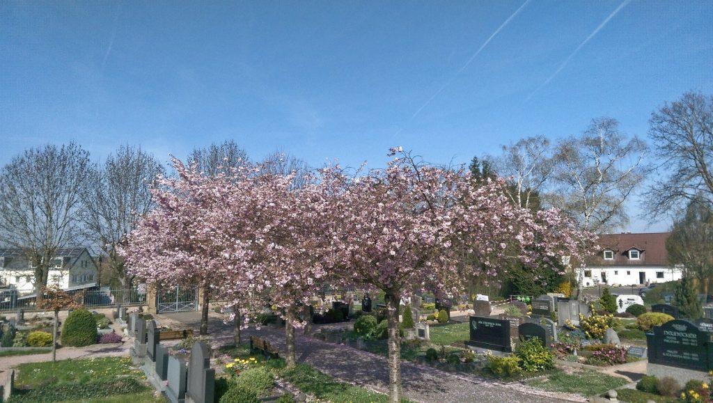 Friedhof von Selzen