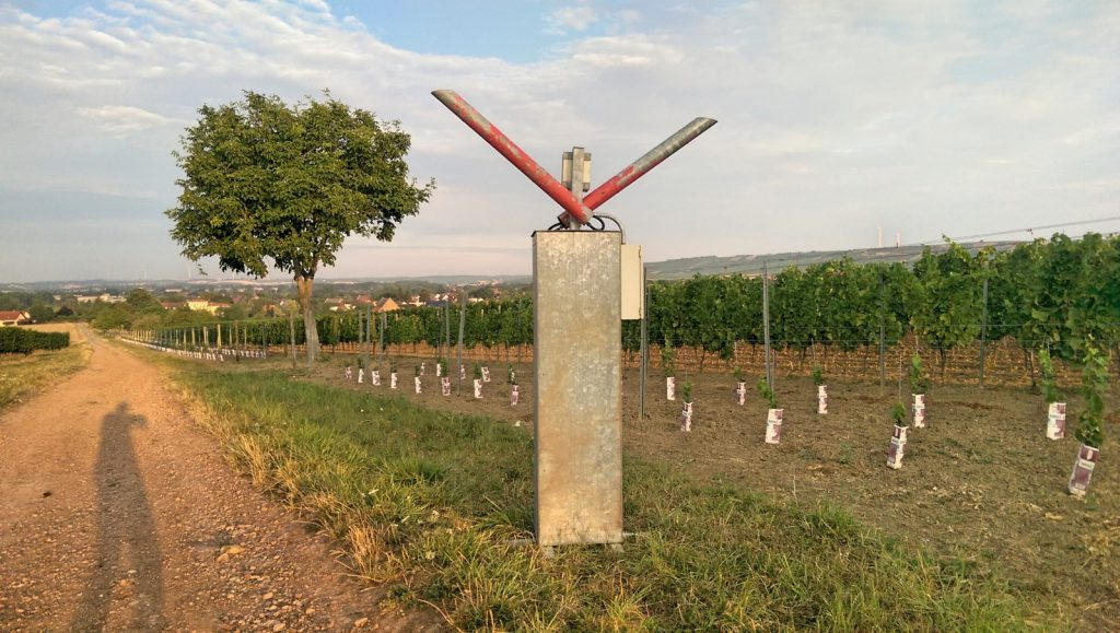 Schussapparat in den Weinbergen bei Selzen