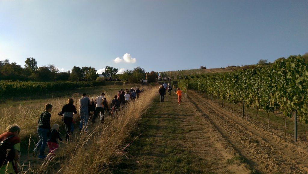 Aufstieg zur Weinprobe am Selzer Berg