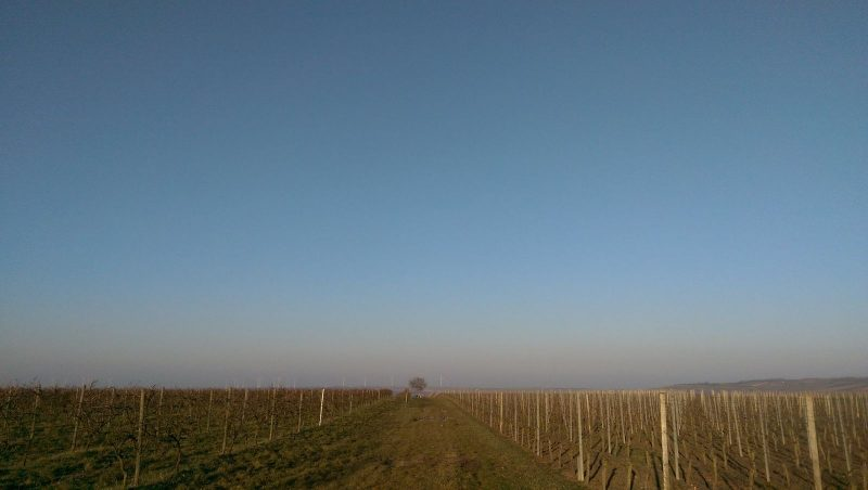 Into the Blue - Joggen in Rheinhessen
