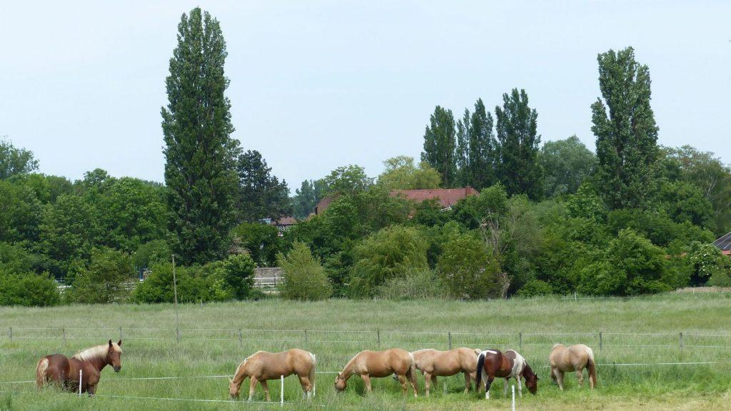 Selztalwanderung: Pferde bei Köngernheim mit Blick auf Jordan's Untermühle