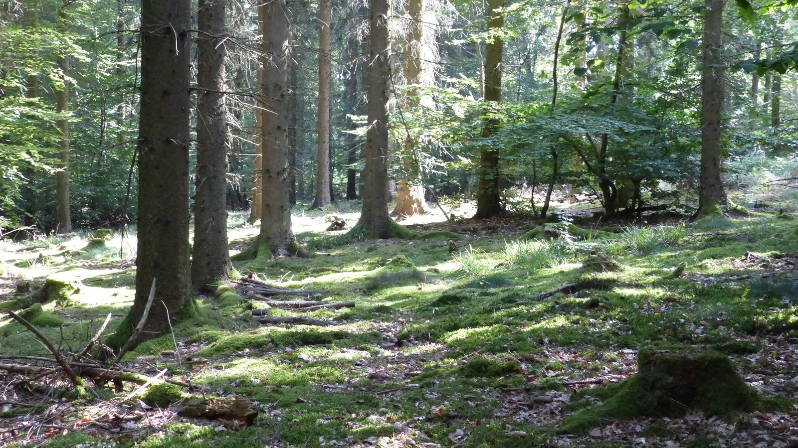 Nationalpark Hunsrück-Hochwald – Bloggerwandern 2019