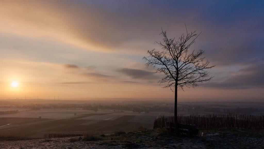 Sonnenaufgang überm Selztal mit Baum und Bank