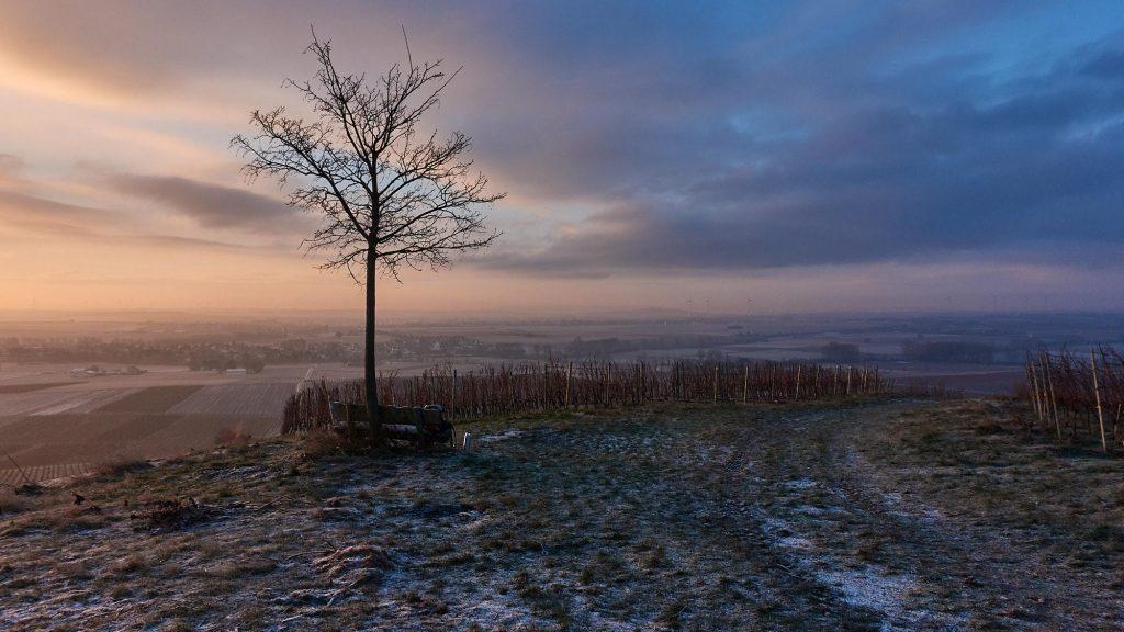 Sonnenaufgang überm Selztal - Bank, Rucksack und Thermoskanne