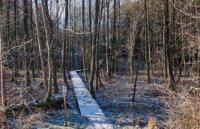 Holzsteg - Traumschleife Litermont-Sagenweg