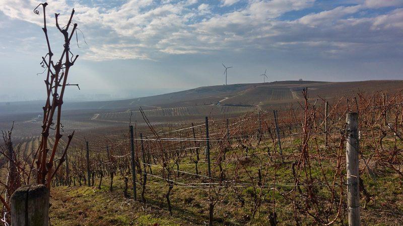 Weinberge und Windräder beim Mommenheim