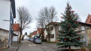 Tannenbaum in Selzen