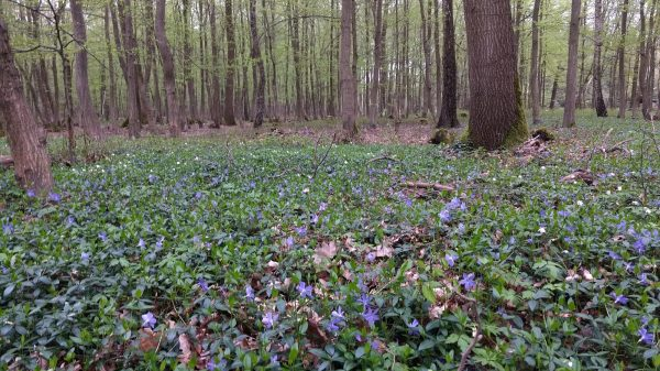 Joggen im Ober-Olmer Wald
