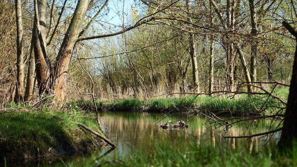 RheinhessenWunderTour: Im Selztal