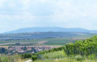 Donnersberg (Pfalz)