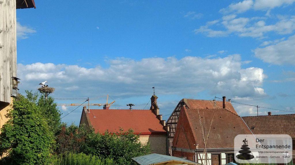 Störche und Mond glotzen in Mietesheim, Elsass