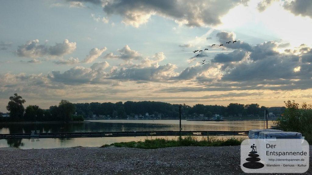 Vögel über dem Eicher See