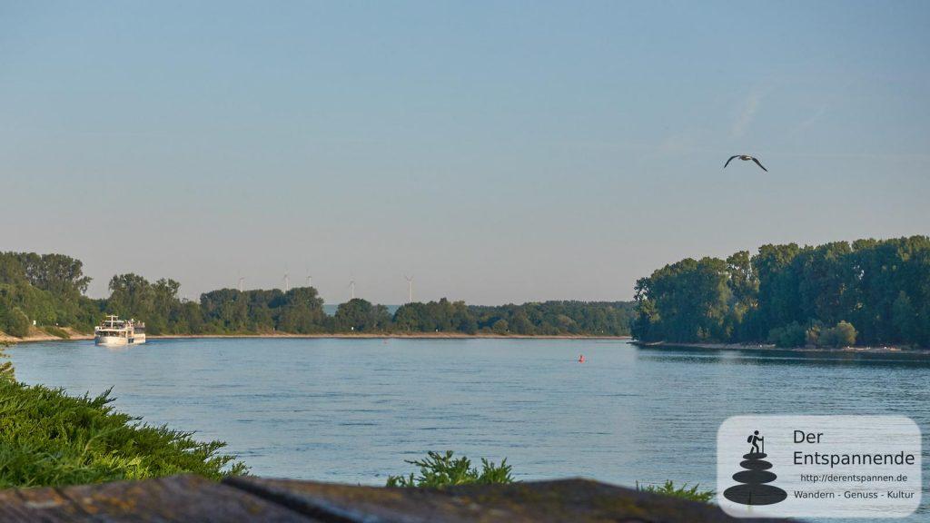 Amasonata auf dem Rhein beim Eicher See