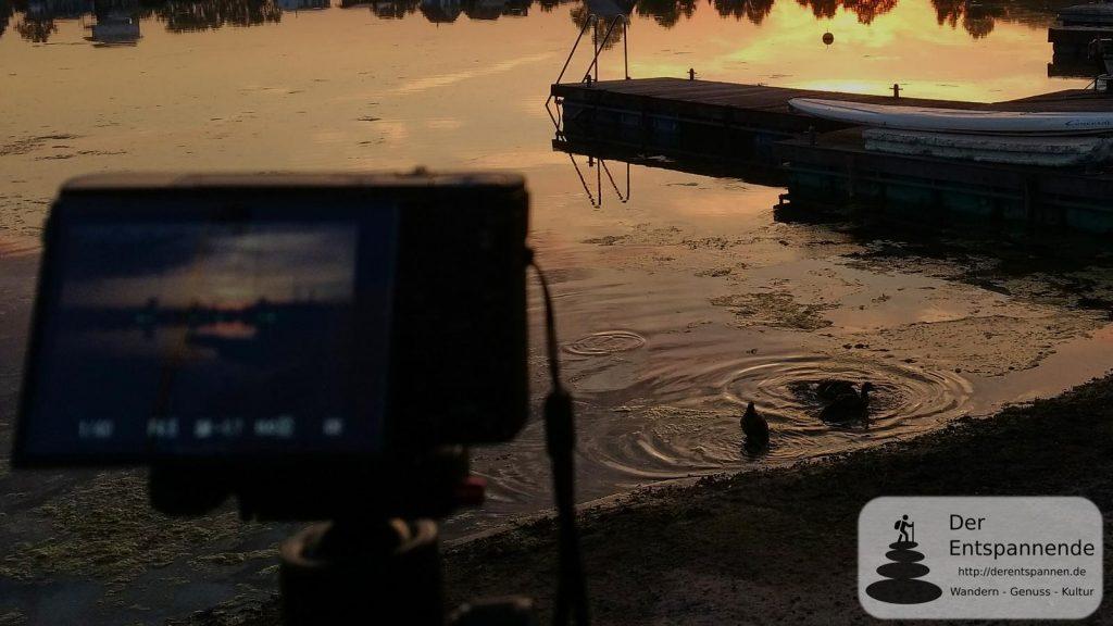 Enten auf dem Eicher See zum Sonnenaufgang