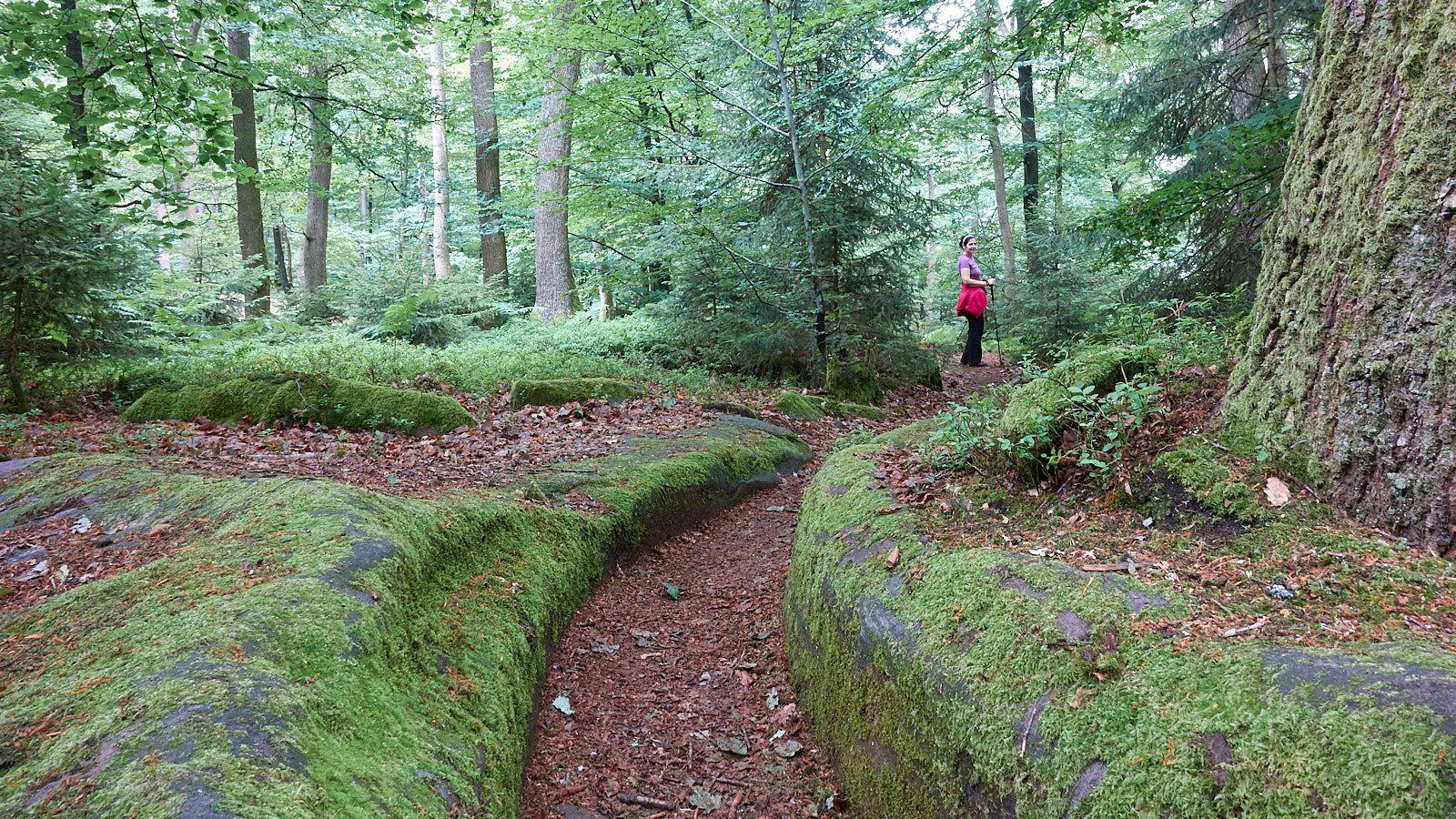 Wandern ums Château du Wasenbourg bei Niederbronn-les-Bains