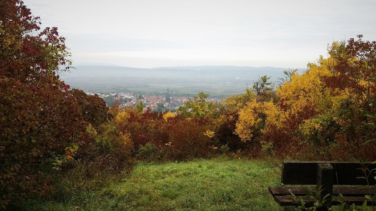 Hiwweltour Bismarckturm Ingelheim – gejoggt und nicht gewandert