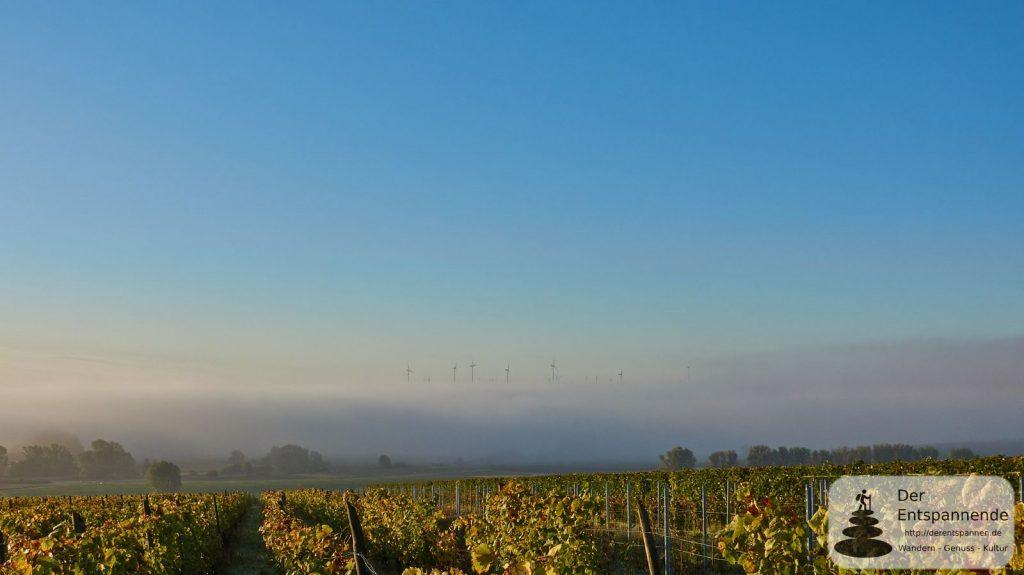 Gau-Odernheim und Selztal im Nebel