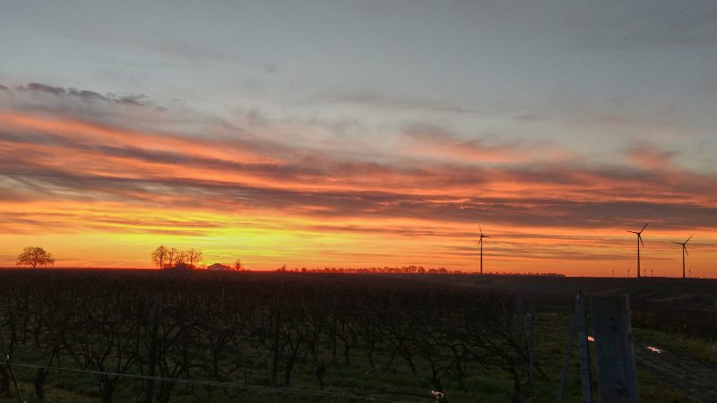 SunriseRun zwischen Selzen und Schwabsburg
