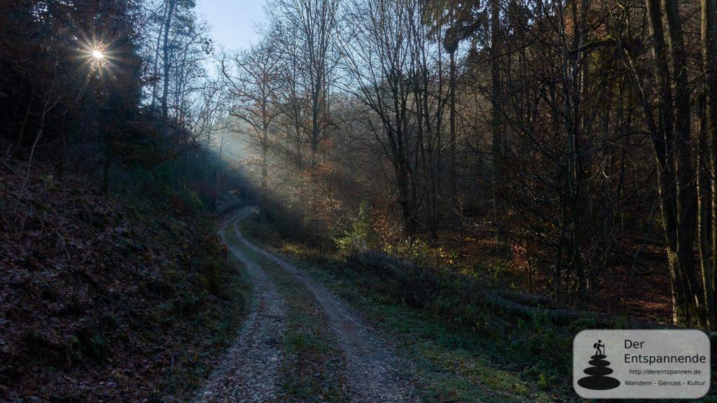 Im Ebernburger Wald