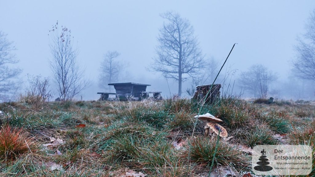 Rast und Pilze Im Ebernburger Wald
