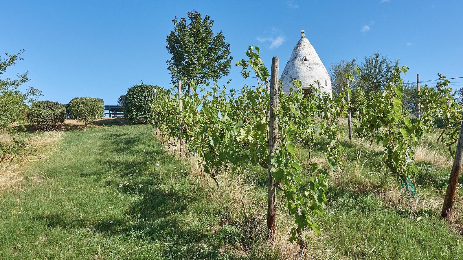 """Tageswanderung """"Hot Rocks"""", Wein und Genuss bei Flonheim am 20.03.2021"""