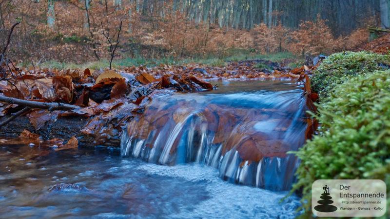 Gutleutbach - Wandern im Wald bei Kirchheimbolanden