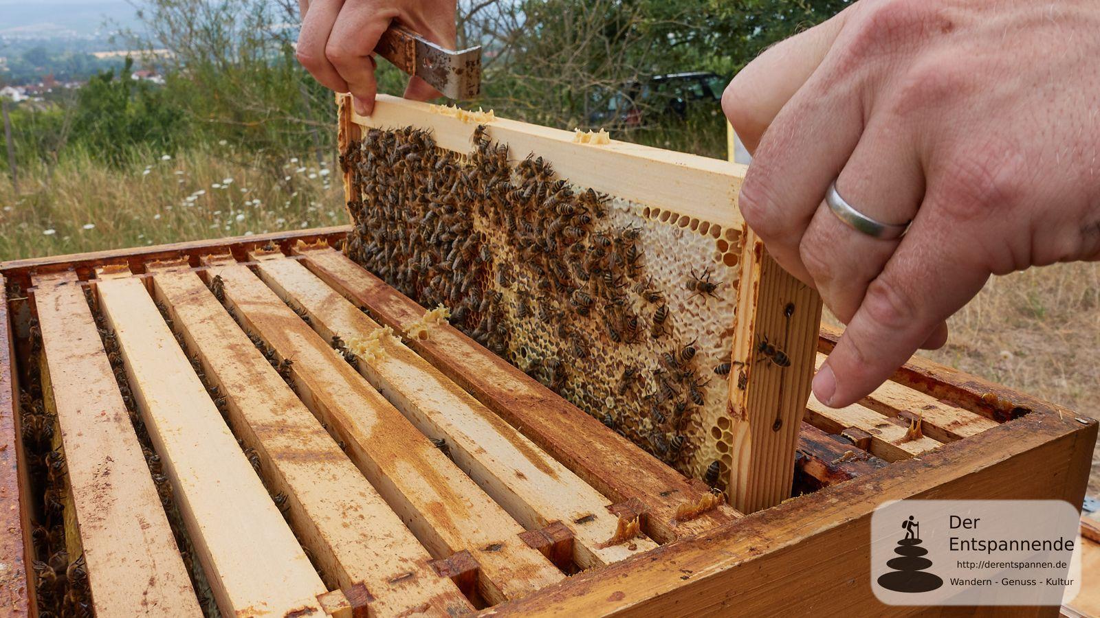 Besuch beim Rheinhessen-Imker: Eine Million Bienen, leckerer Honig und ein Naturschutzgebiet
