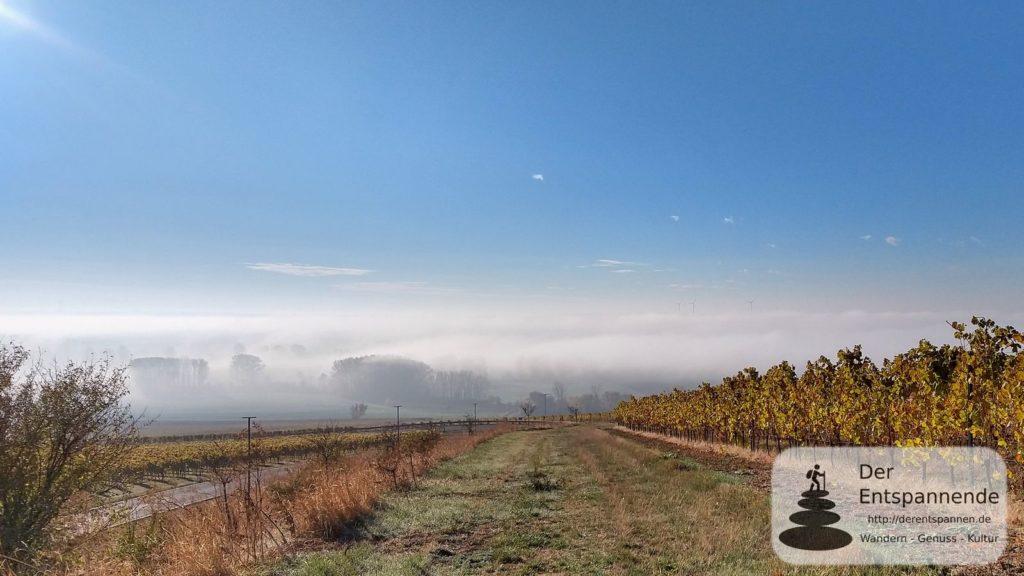 Sonniges Selztal im Herbstnebel