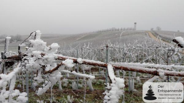 Zornheimer Berg - Raureif im winterlichen Rheinhessen (28.12.2018)
