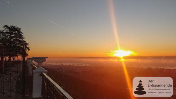 Sonnenaufgang am Schloss Johannisberg #SunriseRun