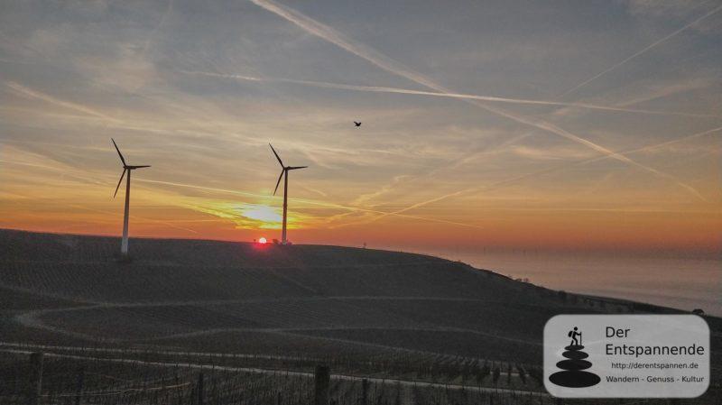 SunriseRun in den Weinbergen über dem Selztal (17.02.2019 bei Selzen)