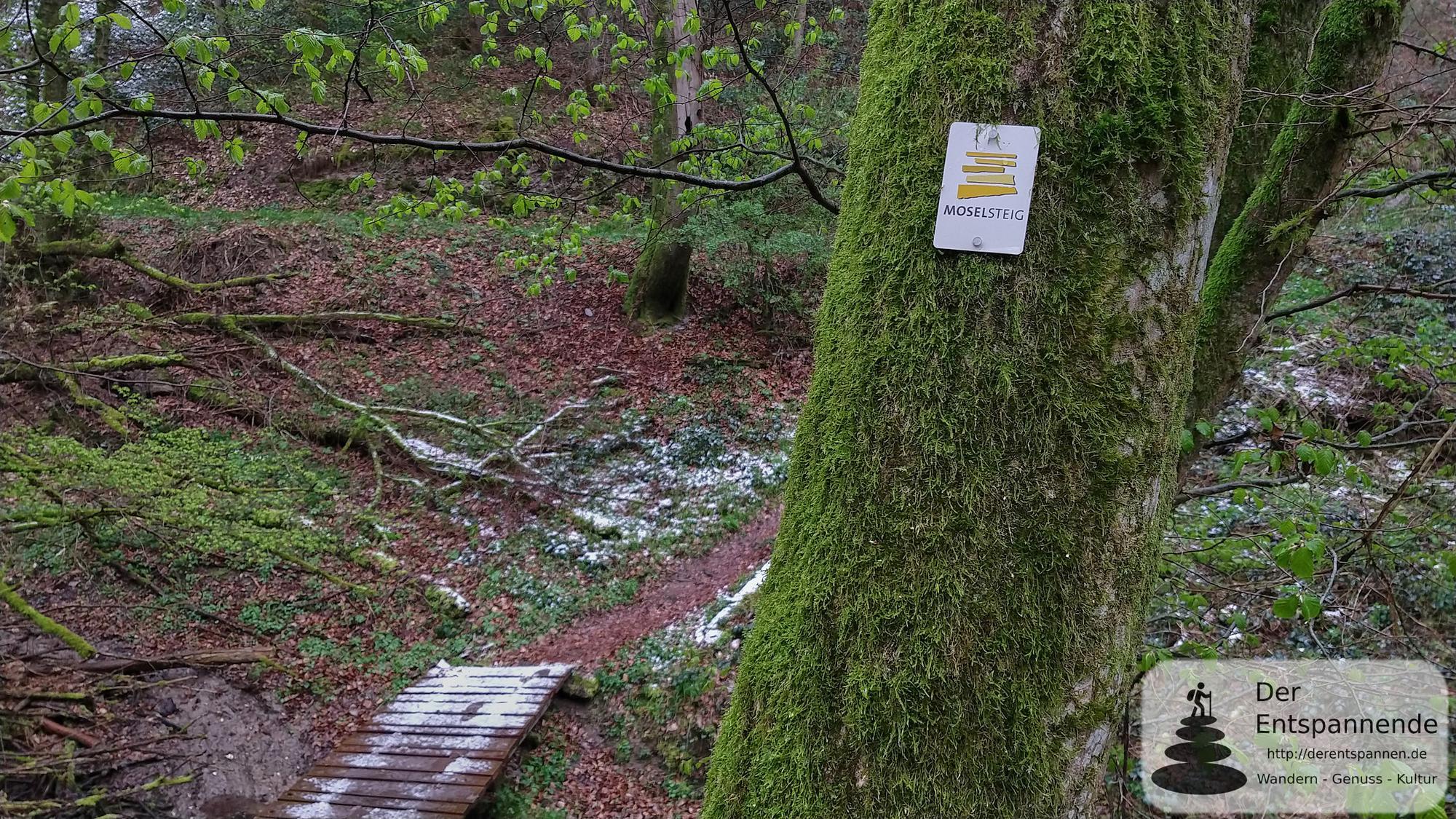 Moselsteig Etappe 19 von Klotten nach Treis-Karden wandern