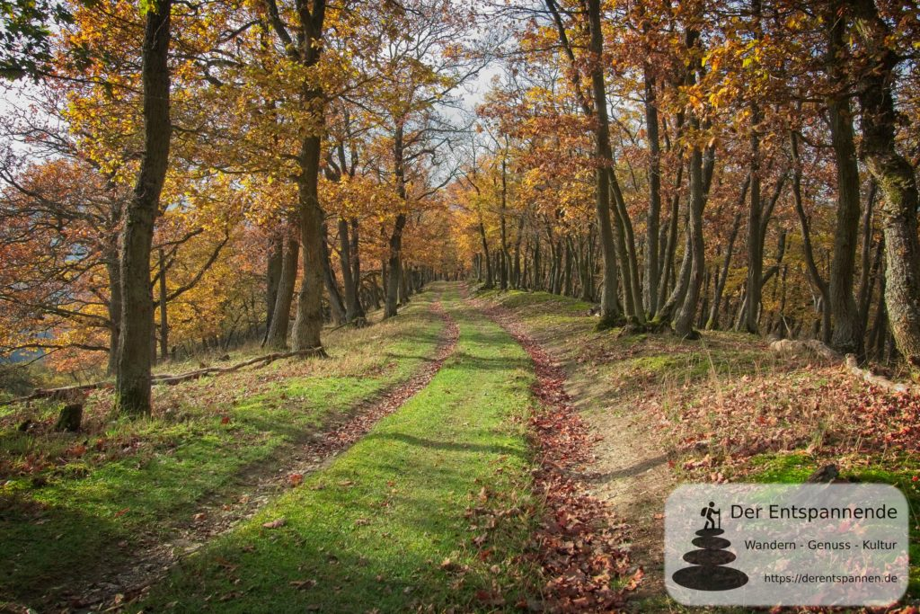 Mystische Eichenwaldallee auf dem Rhein-Wisper-Glück (Wisper Trails)