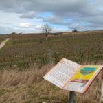 Biblischer Weinpfad Partenheim (Psalm 104, 10-15)