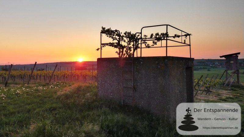 Wingertschütz-Häuschen und Sonnenaufgang in den Weinbergen - SunriseRun Dalheim/Friesenheim