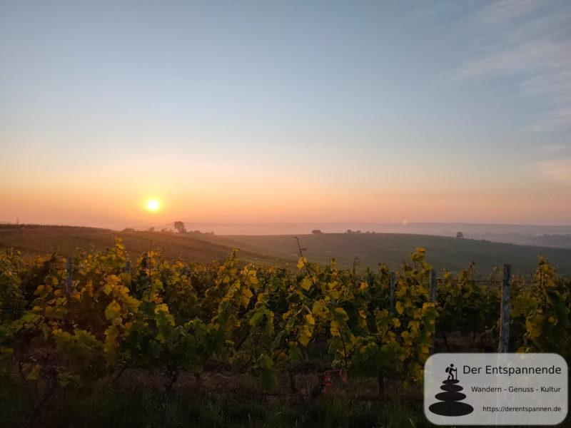 Sonnenaufgang über den Weinbergen bei Selzen