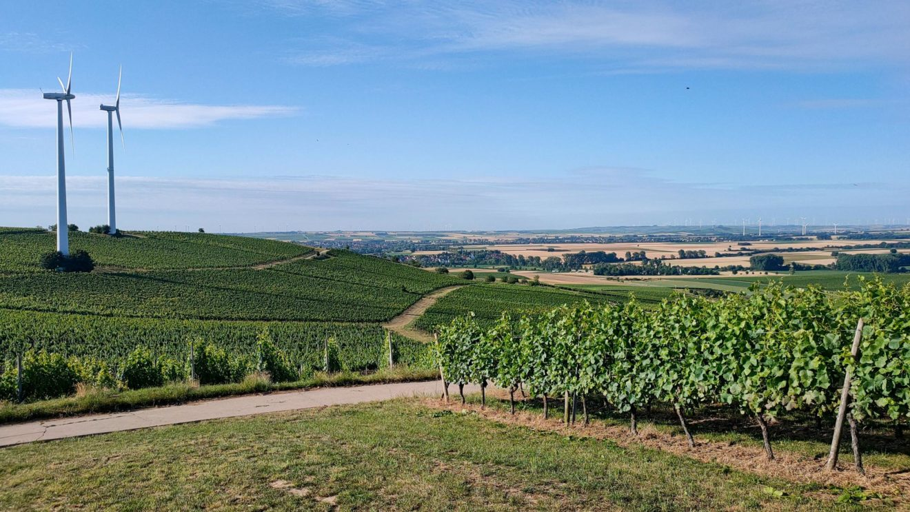 Blick auf das Selztal von der Schönsten Weinsicht 2020 Rheinhessen