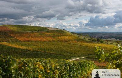 Herbstspaziergang bei Zornheim in den Weinbergen über dem Selztal