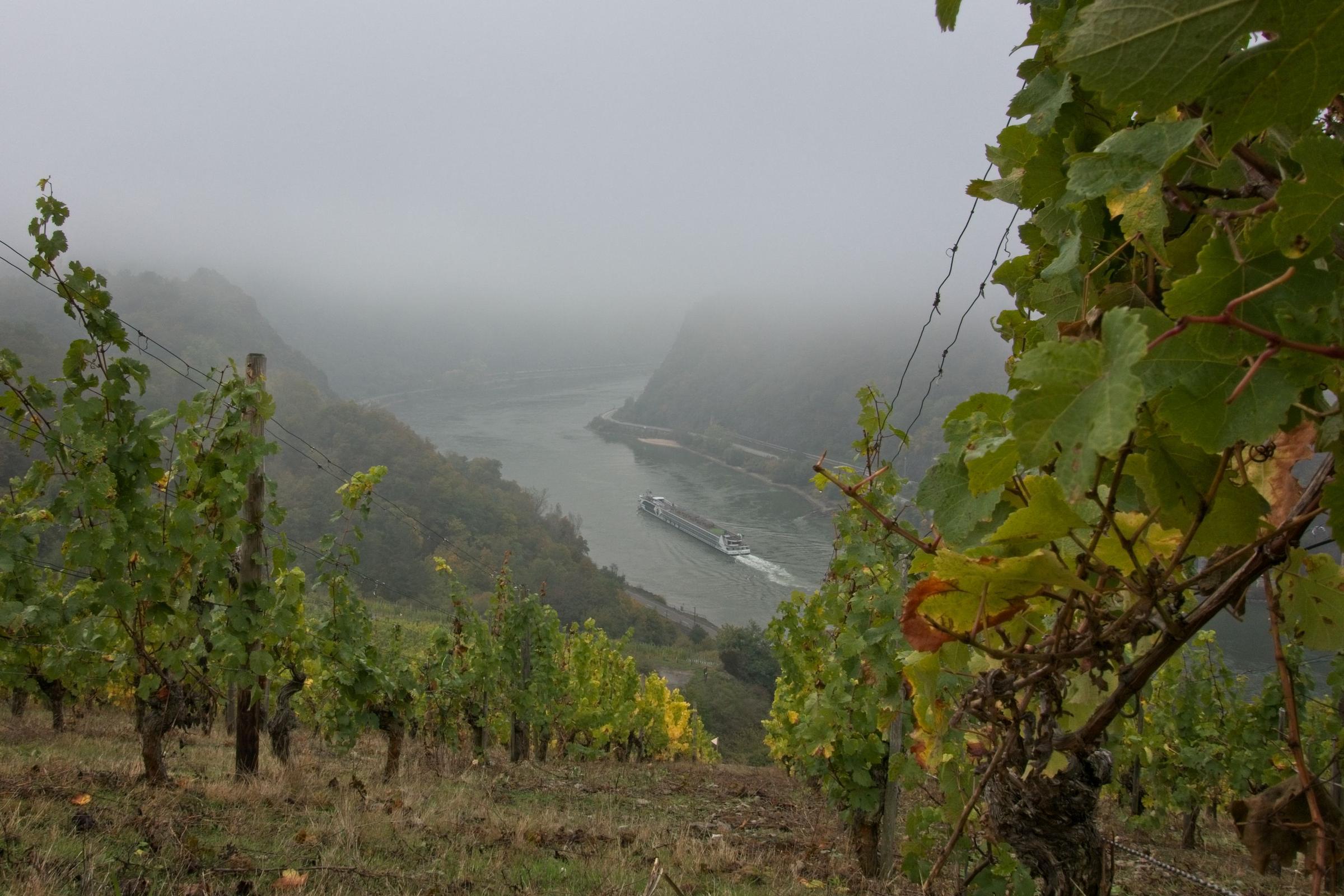 Rhein, Ritter und Romantik – Wandern am Romantischen Rhein