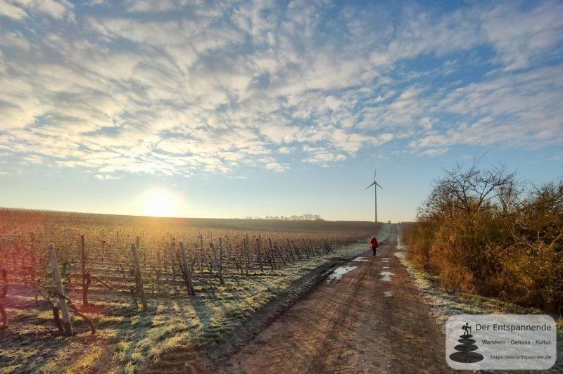 Sonnenaufgang oberhalb von Selzen (Fünf-Dörfer-Wanderung Rhein-Selz)