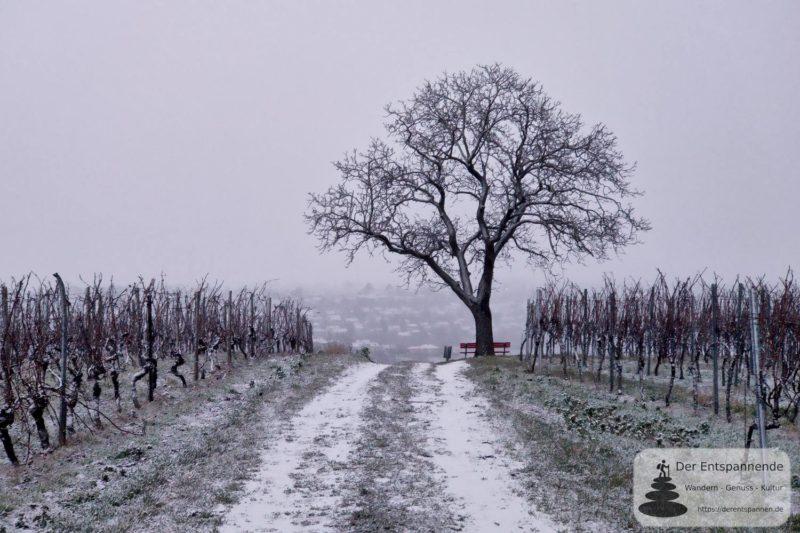 Ruhebank unter Baum am Selzer Berg - Morgenlauf in Weiß Episode II
