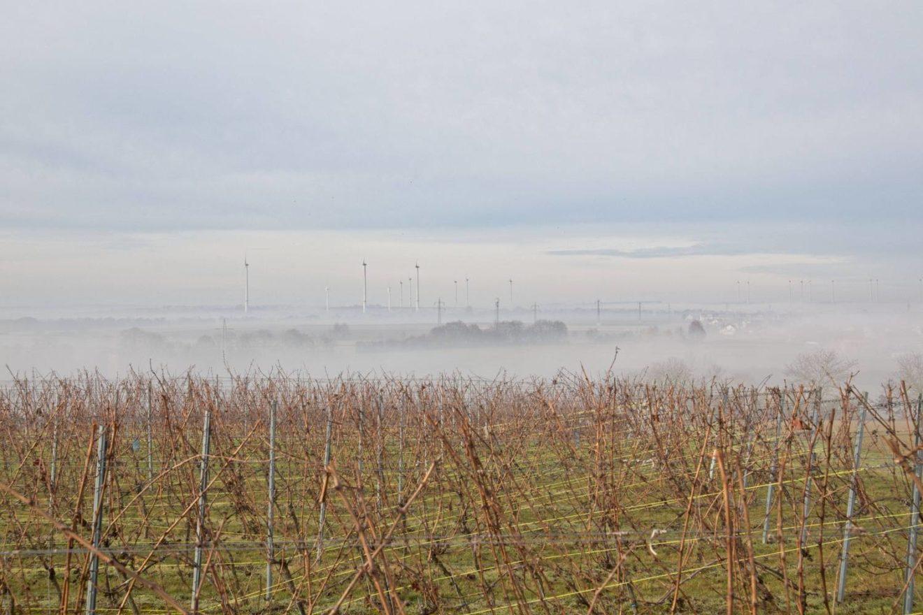 Nebellandschaft in Rheinhessen bei Köngernheim