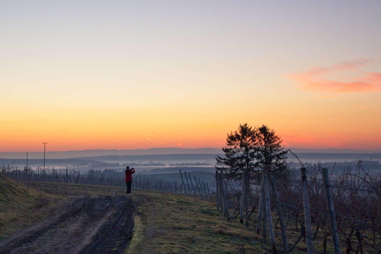 Morgendämmerung über Rheinhessen bei Selzen