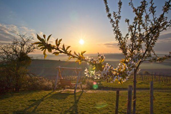 Morgendliche Frühlingssonne über der Schaukel am Petersberg