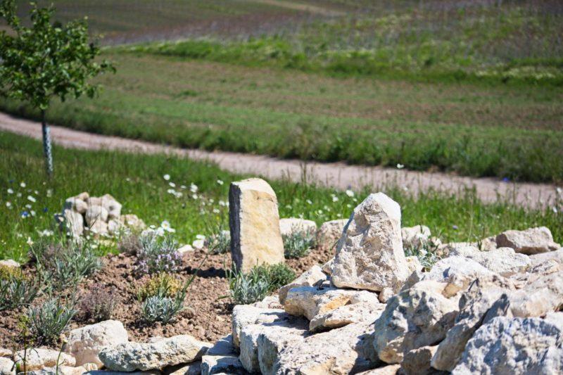 Trockenmauer für Insekten und Eidechsen in Selzen