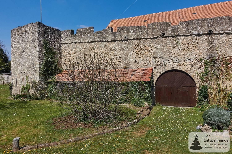 Führung: Spaziergang entlang der Fleckenmauer (Flörsheim-Dalsheim)