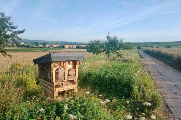 Insektenhotel Deluxe bei Selzen, erbaut am 7. August 2021 in einer Aktion der FWG Selzen