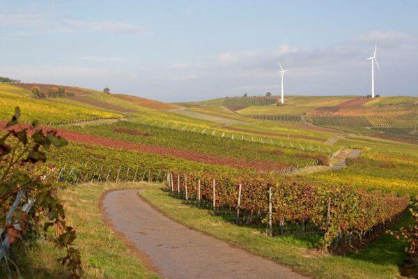Herbstliche Weinberge über Hahnheim, am Zornheimer und am Selzer Berg